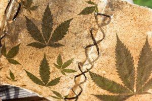 Drugsgebruik voor en tijdens werk